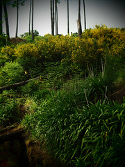 Levada_Vale_Paraiso_05 (Kurrat) Tags: blüten pflanzen nebel fog mist levada valeparaiso funchal portugal madeira madeiraislands landschaft landscape