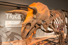 180324 Washington-17.jpg (Bruce Batten) Tags: shadows usa museums trips occasions subjects reptiles locations animals vertebrates businessresearchtrips washingtondc dinosaurs washington districtofcolumbia unitedstates us