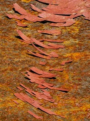 Rust & Paint (Andreas.Huppert) Tags: abstract decay focusstacking graphic macro old paint red rust