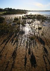 Hastings  2018 006 (Graeme Butler) Tags: wetlands water nature landscape history heritage birdlife victoria australia