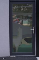 IMGP4422 (hlavaty85) Tags: olomouc dveře door lama llama selfie