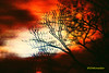 Branches silhouette (Stephenie DeKouadio) Tags: art artistic artwork abstract abstractart abstractpainting painting darkandlight light outdoor night silhouette branches colorful