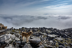 Monty above the clouds (cliveg004) Tags: canisp assynt foinaven northwesthighlands scotland inversion clouds sky mountain rocks peak dog borderterrier monty cairn nikon d5200 landscape