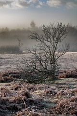 New Forest winter morning
