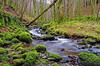 Birnam Glen (eric robb niven) Tags: ericrobbniven scotland dundee dunkeld perthshire landscape moss inchewan burn springwatch