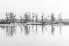 Trees on the Vistula (bożenabożena) Tags: landscape trees warer water river landscapebw poland krajobraz drzewa woda krajobrazbw 2018