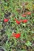2018 Apr 11 (xooxuaa) Tags: moth delphinium larkspur sonoma sugarloaf parks california stateparks wildflower