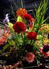 2018-03-10_7471arrange (lblanchard) Tags: 2018flowershow floral arrange