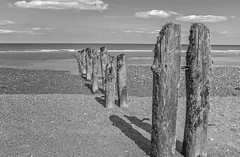 Sandsend: Wooden posts on the beach. (jack cousin) Tags: nikond610 on1photos whitby sandsend yorkshire uk northsea seascape coast coastal shore seashore seaside water'sedge water horizon beach sand outdoor nature breakwater timber wood groyne rotten rotting old dilapidated blackandwhite