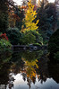 Seattle_Kubota Gardens_Japanese_Fall_Lake Reflections (Zero State Reflex) Tags: seattle washington pnw kubotagarden graden trees lake japanese landscape landscapephotography photography canon 5dmark3