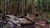 Burns Bog Bench (Martin Smith - Having the Time of my Life) Tags: burnsbogbench burnsbog bench samsunggalaxys8 martinsmith ©martinsmith hbm delta britishcolumbia canada ca forest wood park