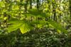 Lentegroen/Spring green (truus1949) Tags: wandelen lente natuur bladeren bossen