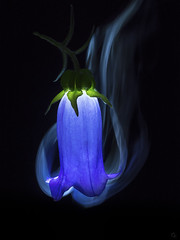 smoky bell (Ichi De) Tags: flower lamp candle blue smoke dark lowkey green purple night nature omd panagor vintagelens manualfocus abstractnature fineart