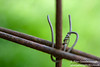 Barbed (alanjamesphoto79) Tags: barbed wire steel fence sharp pointed cut protect bokeh close ip up canon 1000d plants wild flowers