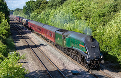 LNER A-4 Pacific Class 60009 UNION OF SOUTH AFRICA  with the 1Z27 Worcester Shrub Hill to London Paddington Charter passing Haresfield (neilvallender) Tags: lner class a4