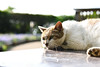 Thinking cat(眠っている猫) (daigo harada(原田 大吾)) Tags: enoshima view landscape animal