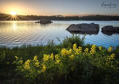Summer Serenity - Dowdy Lake - Red Feather Lakes, Colorado (www.rootsstudiophoto.com) Tags: redfeatherlakes dowdylake badgercreekfire reflection lake wildflowers sunset rockymountains coloradophotography lakephoto summer larimercounty mountainlake camping serenity peace