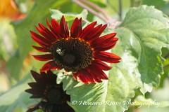 Manoff Farms  (35) (Framemaker 2014) Tags: mangas farm market gardens bucks county southeastern pennsylvania flowers united states america new hope