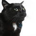 A154958 -- Max -- Black Cat