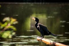 L'oiseau maléfique (GillesBretin) Tags: animaux format lieux 32 france opaysage oiseaux