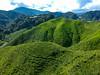 malaysia-0095 (ericvdb) Tags: cameronhighlands highlands teaplantation plantation malaysia