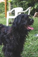 DSC_2044 (fábioparasmosánchez) Tags: dogs pets cute animals portraits eyes galgo italiano italian german shepherd adoption adopt