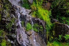 20180615 029 Mt Rainier Christine Falls (scottdm) Tags: 2018 christinefalls june mountrainiernationalpark paradise spring travel usa unitedstates wa washington washingtonstate waterfall ashford us
