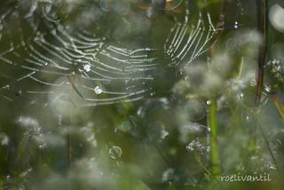 Spinrag met druppels/Cobweb with drops