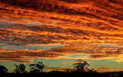 AN AUSSIE LANDSCAPE SUNSET (Lani Elliott) Tags: nature naturephotography scene view scenic sunset clouds sky trees orange fiery color colour colourful scenictasmania silhouette silhouettes superb beautiful
