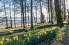 DSG_1478_1.jpg (alfiow) Tags: appley appleybeach appleytower daff daffodil daffodils