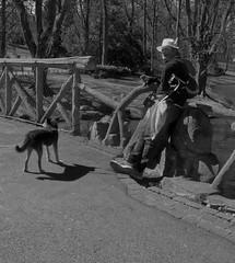 L'Indien à Schaerbeek - The Indian in Schaerbeek (p.franche Visit(ez) mes expositions) Tags: snapshot streetshot people homme man dog chien parc park chapeau hat plume plum panasonic lumix fz200 bruxellesbrussel brussels belgium belgique belgïe europe pfranche pascalfranche hdr dxo phototab flickrelite schaerbeek schaarbeek yourbestoftoday parcjosaphat josaphatpark skancheli monochrome noiretblanc blackandwhite zwartwit blanconegro schwarzweis μαύροκαιάσπρο inbiancoenero 白黒 黑白 чернобелоеизображение svartochvitt أبيضوأسود mustavalkoinen שוואַרץאוןווייַס bestofbw