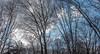 DSC00181-Pano (johnjmurphyiii) Tags: 06416 clouds connecticut cromwell originalarw shelly sky sonyrx100m5 spring usa yard johnjmurphyiii