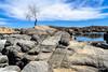 A tree by the lake (doveoggi) Tags: 1541 arizona prescott lake tree boulders water landscape yavapaicounty