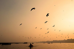 River Ganges at Sunset, Varanasi (pallab seth) Tags: varanasi benaras india banaras boatman gull sunset riverganges