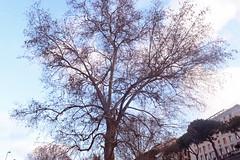 My city (umbyaiello1998) Tags: tree napoli naples sky blue bluesky nikon nikond5300 italy italia italien photo great green colors colours
