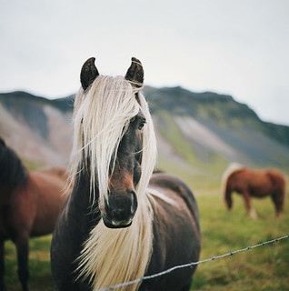 the best mane in iceland