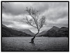 Waiting for Spring (Swirly_Magnolia) Tags: wales snowdon snowdonia national park uk tree water lake mountains snow hills beautiful landscape bare winter mist scene black whit interesting photo nikon wide angle lens drama dramatic clouds sky skies hanks