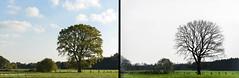 Pannenhoef (Jan Bogers) Tags: janbogers d800 2470 pannenhoef zundert kleinzundert landschap ganger brabants arbre tree saisons seasons boom bomen