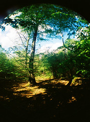 Arch (rubymalloy) Tags: arch trees nature shadow light colours colourful green blue yellow golden forest fisheye fish eye lens film 35mm camera grainy wide scenery landscape