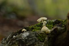 Setas (Hachimaki123) Tags: seta setas mushroom