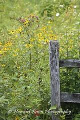 Bowman Hill Preserve (35) (Framemaker 2014) Tags: bowman hill wildflower preserve bucks county new hope pennsylvania delaware valley southeastern united states america