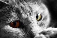 Ellie, colorkey (Isaril) Tags: ellie colorkey cateye