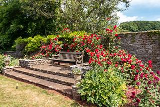 Rose garden at Compton Castle