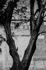 GRU, sp (Th. C. Photo) Tags: gru guarulhos street streetphotography streetphoto streetphotographysp photography fotografia rua fotografiaderua pretoebranco blackandwhite pb bw