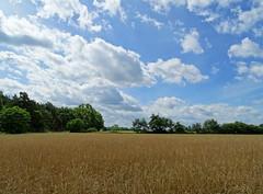 Cloudy Sky (The-Beauty-Of-Nature) Tags: summer sommer june juni nature germany deutschland plants pflanzen green grün lush sunny sun sonne sonnig warm fields feld sky clouds