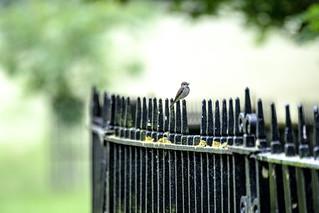 little bird on a fence