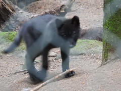 DSCN0394 (SiegmundB) Tags: parc animalier des monts de gueret
