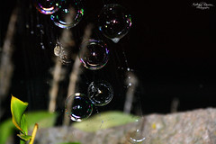 The Spider and the Bubbles (kaeley.warren) Tags: bubbles spiders spiderwebs