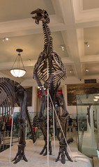 Museum d'Histoire Naturelle de (Comète78) Tags: new york museum musée dinosaure dinosaur dinosaures squelette squelettes tricératops tyrannosaure fossile