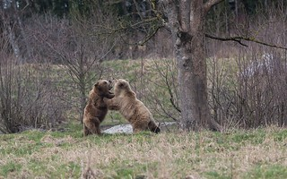 Wildpark Poing April 2018